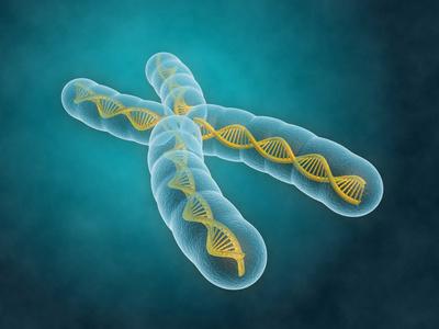 Neue Risikogene für Neurodermitis gefunden